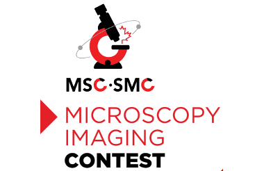 Winners of the Imaging Contest